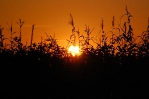 Sunset in Honfleur